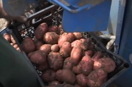 Zbog čega uvozimo mladi krompir