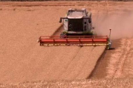 Ratari zadovoljni prinosom, očekuju dobru cenu za pšenicu