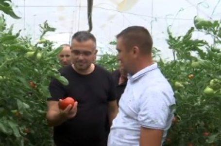 """Država obećava pomoć povrtarima, šta će biti sa """"morem"""" paradajza"""
