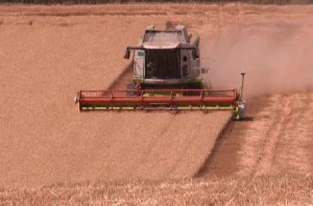 Žetva skoro završena, prinos pšenice iznenadio